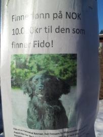 hund savnet