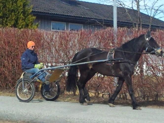 Hesten gimli